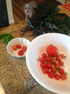 Kale, basil,strawberries,tomatoes