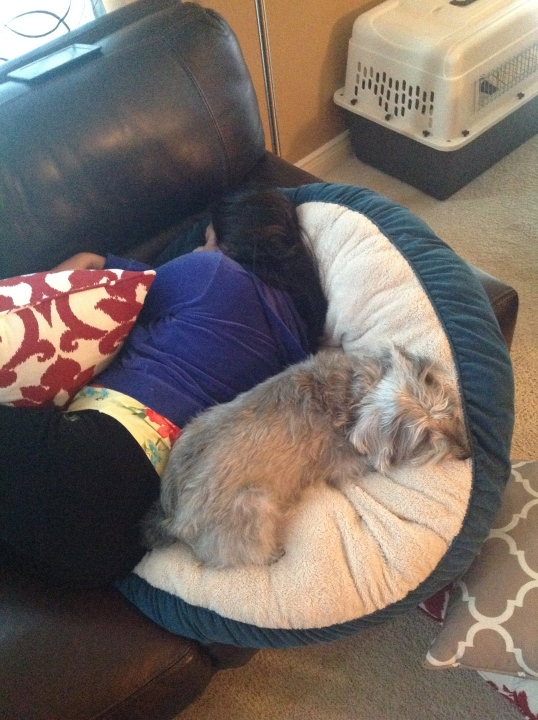 nap time! I'm using his dog bed too!