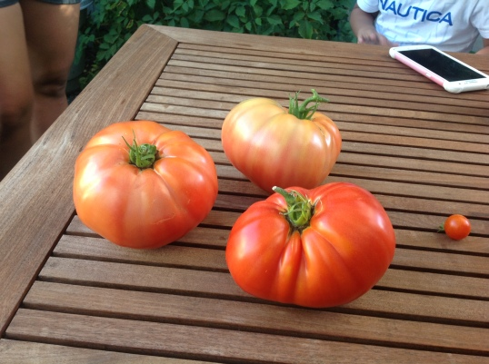 Gave these HUGE tomatoes to Faye,I hope she will like it and will enjoy it in her scrambled eggs!hehe