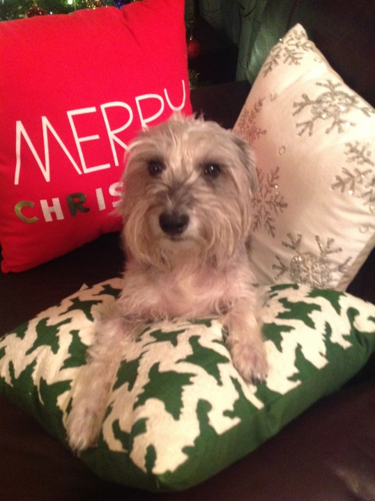 the new Holiday pillows,Riley liked it too!